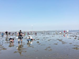 「潮干狩り」を楽しもう!時期・道具から砂抜きの方法までご紹介