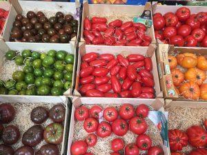 トマトをおいしく食べよう!種類と特徴、おすすめの食べ方をご紹介