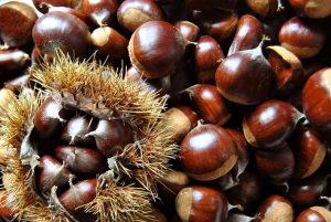 栗の種類って?品種ごとの特徴から保存方法、見分け方まで大特集!