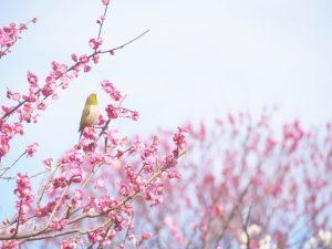 立春大吉とは?立春の意味・由来から縁起のいい食べ物まで