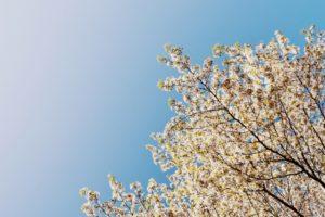 【春分の日】2019年はいつ?決め方と計算方法・過ごし方をご紹介