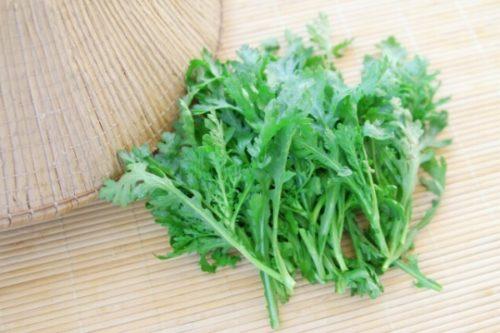 関西の菊菜と関東の春菊それぞれの特徴と違い